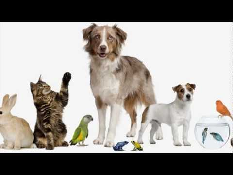Have you got a pet? (song for children)