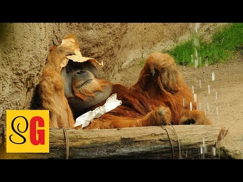 Tierparks - Slow German #069