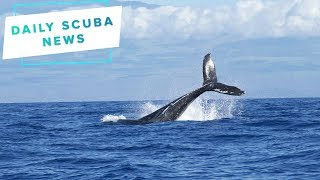 Daily Scuba News - Protected marine life could be worse off