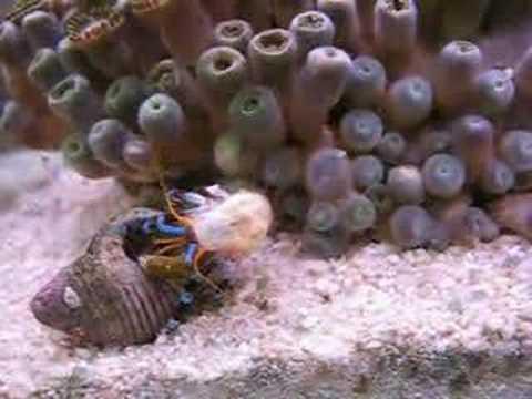 Rampe aquarium eau de mer