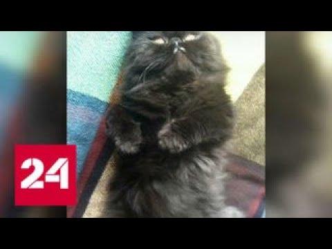Из всех животных Скрипалей выжил лишь кот из России - Россия 24