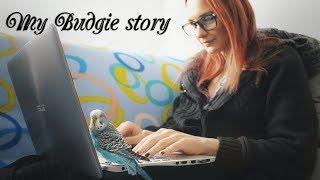 My Budgie story