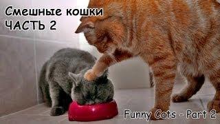 Смешные коты и кошки - видео приколы с кошками #2