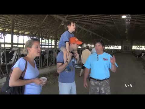 Ice Cream Sweetens Dairy Farm Tours