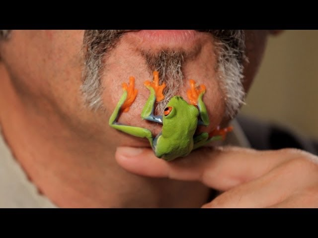 5 Care Tips for Red-Eyed Tree Frogs | Pet Reptiles