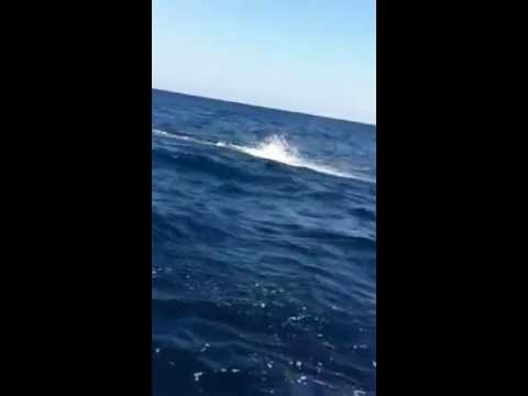 Fishing Sailfish