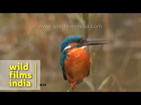 Best of Panna and Bandhavgarh