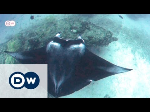 Mozambique - In the Realm of the Manta Rays   Global 3000