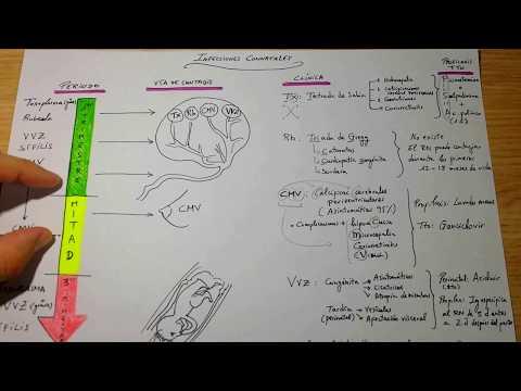 Esquema Infecciones Neonatales thumbnail