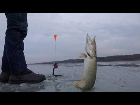ловля щуки на мелководье жерлицами видео