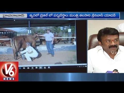Brazil Delegates Meets Minister Talasani Srinivas Yadav | Dairy Industry Development | V6 News