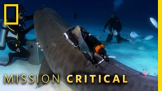 Tiger Shark Photographer | Mission Critical