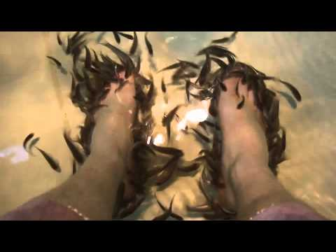 The Fish Pedicure - a foot-holder s-eye view