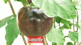 Make a vegetable garden.Learn about the cultivation of vegetables in the home.সবজি বাগানের পরামর্শ ।