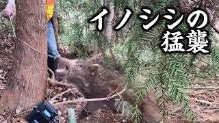 イノシシの猛襲【狩猟番組】