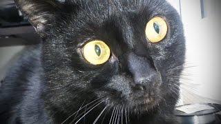 Cute Cats Feeling GUILTY or GUILTY Cats Feeling CUTE? [Funny Pets]