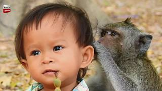 Monkey and Kid/ Monkey looks after kid/ Animal Loves Human being Youlike Monkey