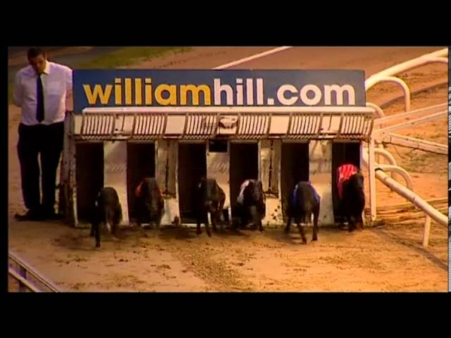 Greyhound Derby Video 2013