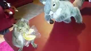 Squirrel Vs.Squirrel Puppet: Battle of the fortune cookie!