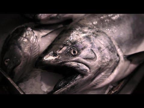 Copper River Salmon Season 2014 First Fish