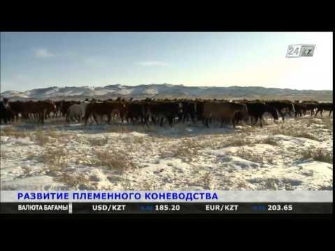 В Карагандинской области развивают племенное коневодство