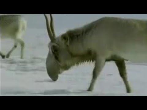 Weird fossils - Wild New World - BBC