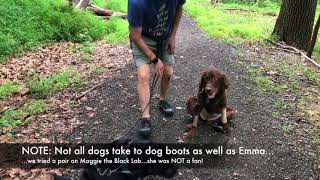 Tips for Making Dog Boots Part of Your Movement Routine