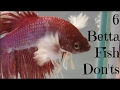 6 Betta Fish Don'ts