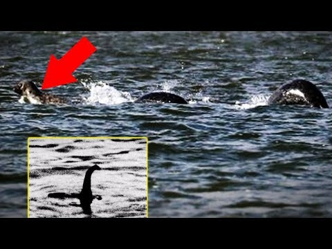 5 Cryptids Caught on Camera & Spotted In Real Life!
