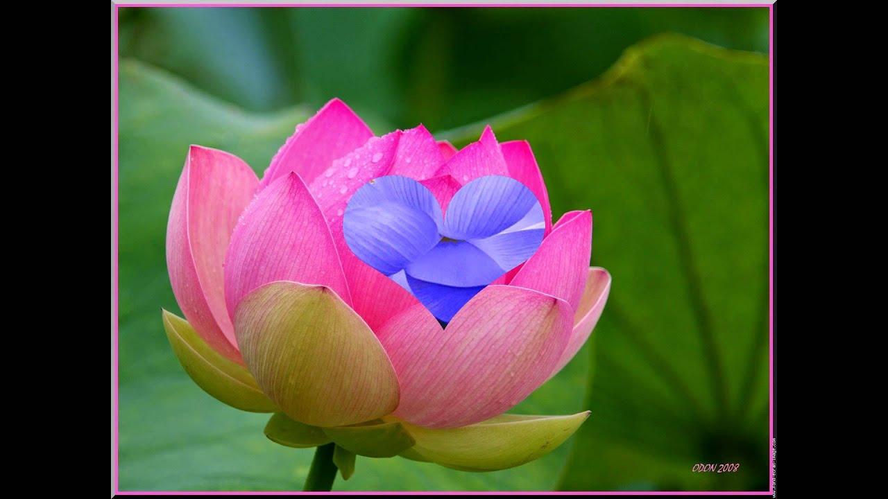 Fleurs de drag es - Drag es pour toutes occasions Belles photos de fleurs
