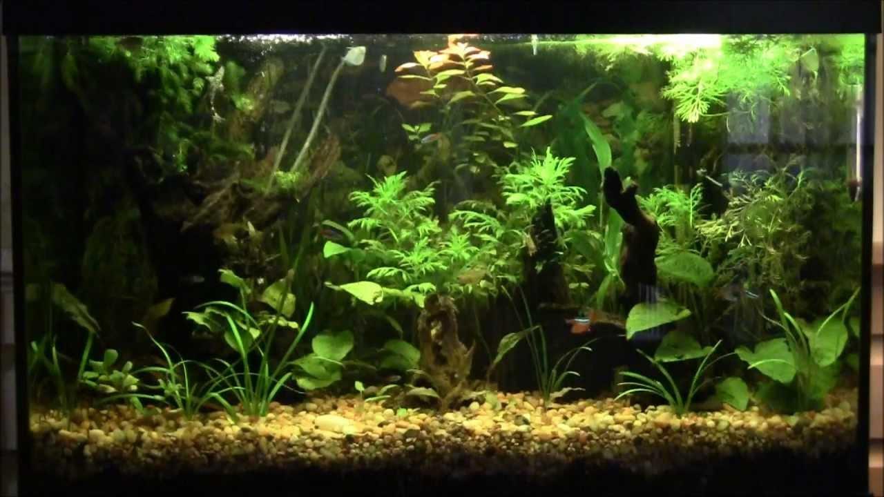 29 gallon planted aquarium youtube for 10 gallon fish tank stocking ideas