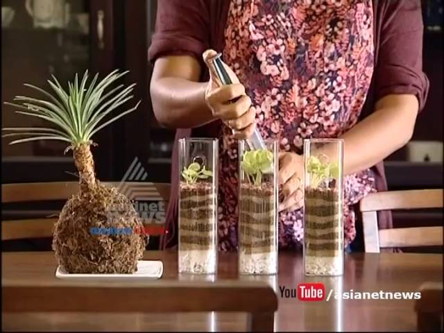 Terrarium by Ganga and Lekshmy | Money Time 1 July 2016