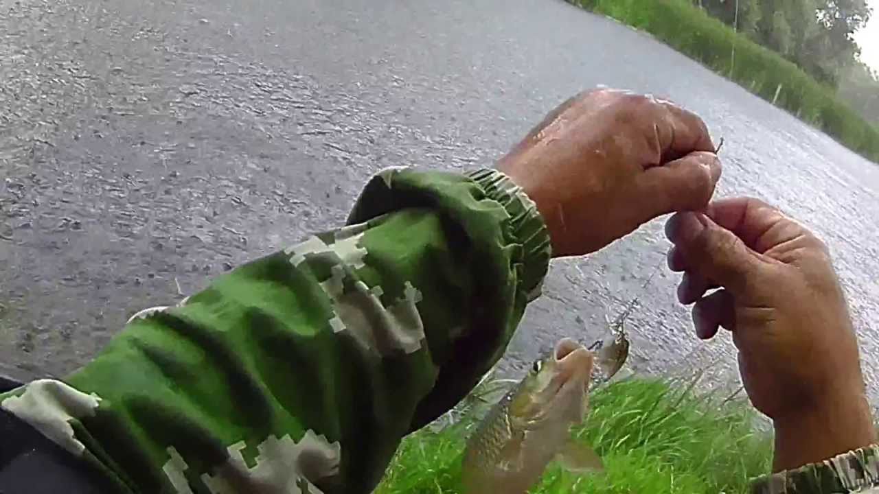 как наловить лягушек для рыбалки