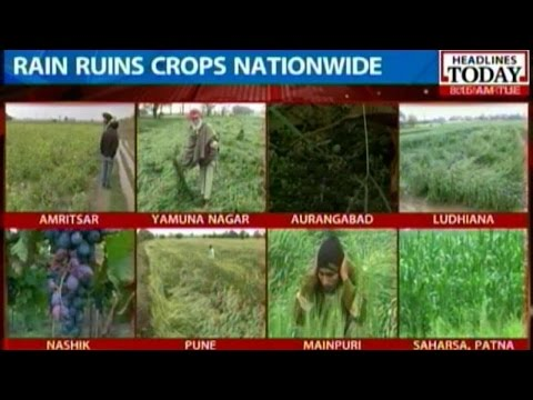 Cruel Blow to Farmers as Unexpected Rain Kill Crops