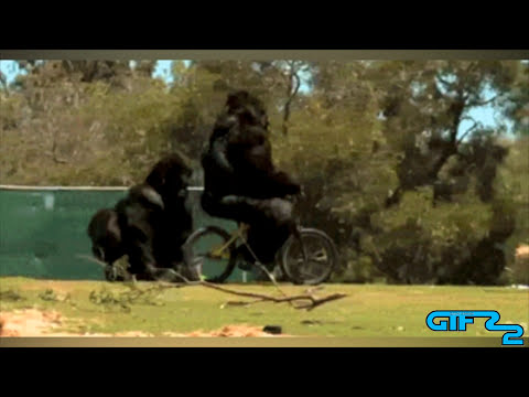 GIFs With Sound #31 FAN FRIDAY March 2015