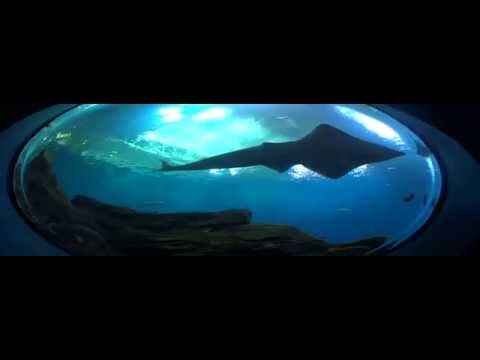 Georgia Aquarium Walkthrough [HD]