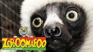🐒 Zoboomafoo 🐒 Season 1 Episode 1-5 Full Episode Compilation | Kids TV Shows