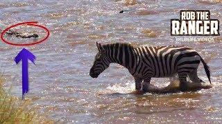 Lucky Zebras Cross Crocodile Infested River | Maasai Mara Migration