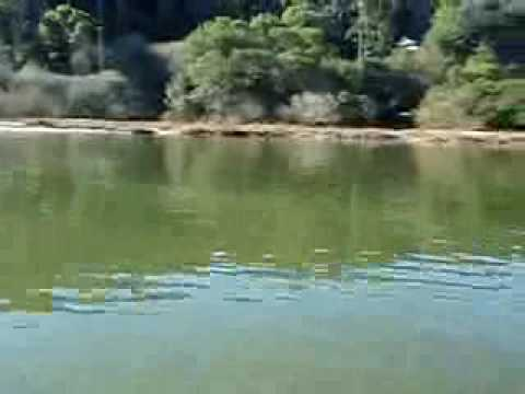 Leopard sharks tomales bay 11 15 09 youtube for Tomales bay fishing report