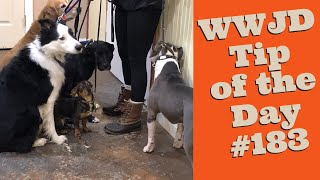 What Would Jeff Do? Dog Training Tip of the Day tip #183 Nervous Dogs