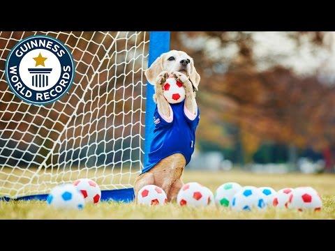 Record Guinness para la Beagle que más para.