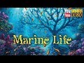 30 Min 174 Hz 417 Hz 741 Hz Soft Lounge Music Calming Ambient Melody For Daily Relax mp3