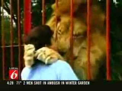 Lion Attack - Ataque de leao