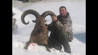 Hunting in Azerbaijan GLOBAL SAFARI AZERBAIJAN