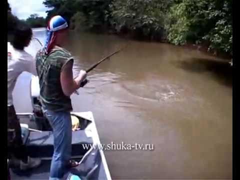 рыбалка на панцирную