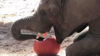 Elephant Pumpkin Smash