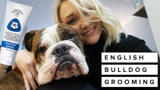 How to Groom an English Bulldog | Laura Lee