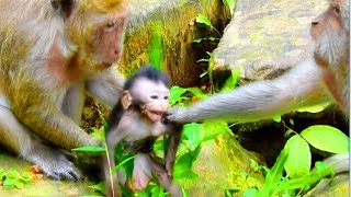 OMG! Popeye Grabbing Baby Timo From Mommy Tima, But Finally, Mommy Seize Back and Escape From PE
