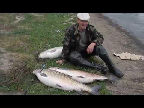 белый амур как ловить его пруду