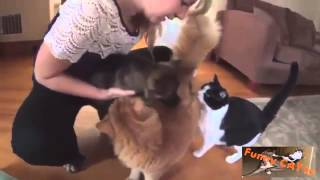 Cats and Dogs Meeting Each other For The  First Time